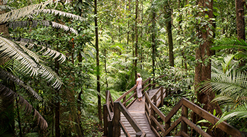 cairns-reef-and-rainforest-02