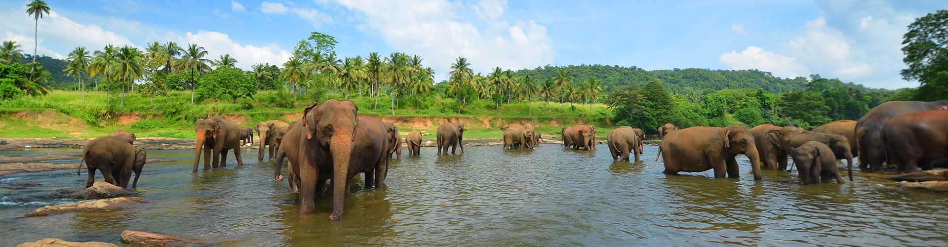 sri lanka elephants and nature of sri lanka1